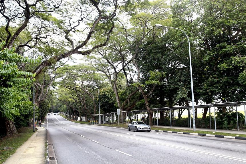 Greenery lines Upper Aljunied Road, viewed here from Upper Serangoon Road. The stretch of Upper Aljunied Road that will be pedestrianised, with its canopy of mature trees, fits well into the lush blueprint for Bidadari.