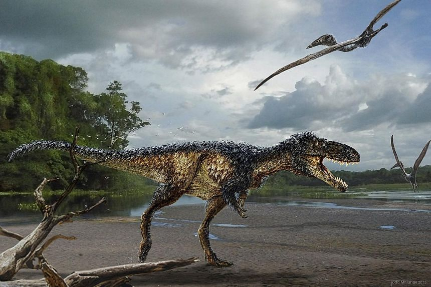 A reconstruction based on newly found bones of T. rex's much smaller cousin - Timurlengia euotica. A study has found that the latter had already developed a large brain needed for tracking and devouring prey, thus making it a more successful - and pe