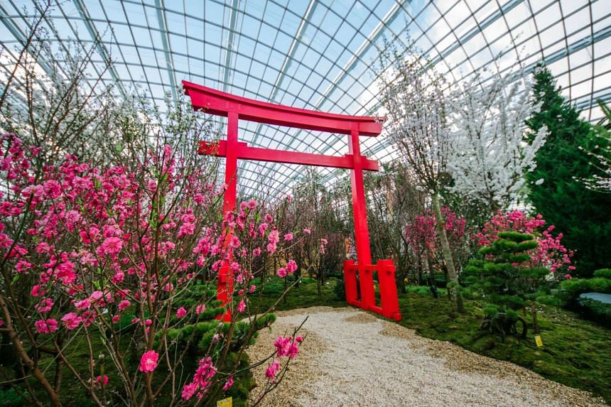 Gardens by the Bay's Blossom Beats features a variety of cherry and peach blossoms in a Japanese-style garden setting.