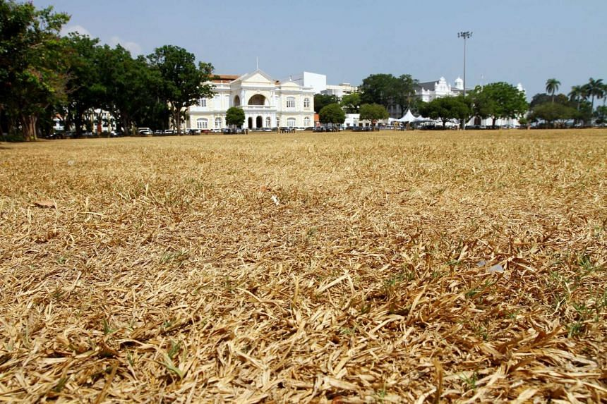 Due to the hot weather, the esplanade green field has turned brown.