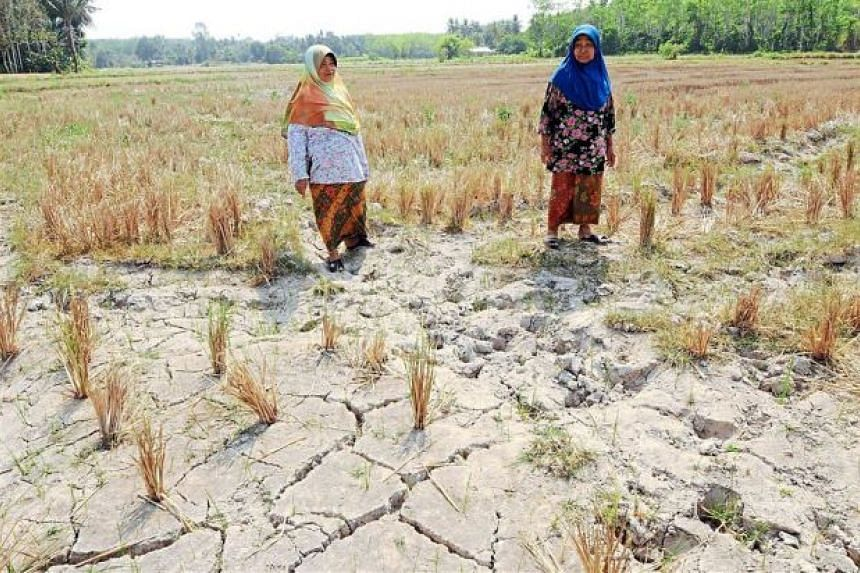 Malaysian farmers Yudoh Kamis (right) and Hatijah Ahmad Saad stand on a parched padi field.