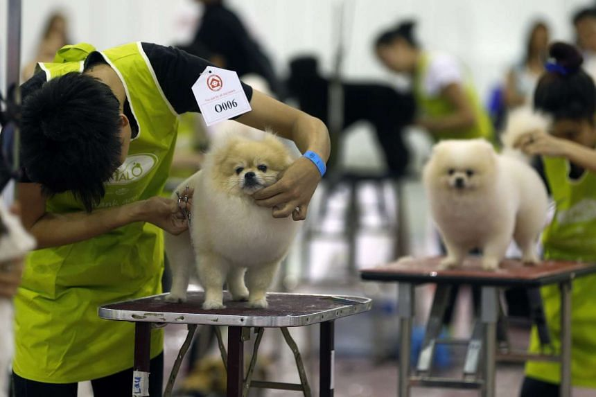Blood donor registry for dogs and cats to be launched at upcoming Pet Expo