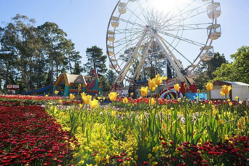 A visit to the tulip festival in Canberra is included in Chan Brothers Travel tours to Australia.