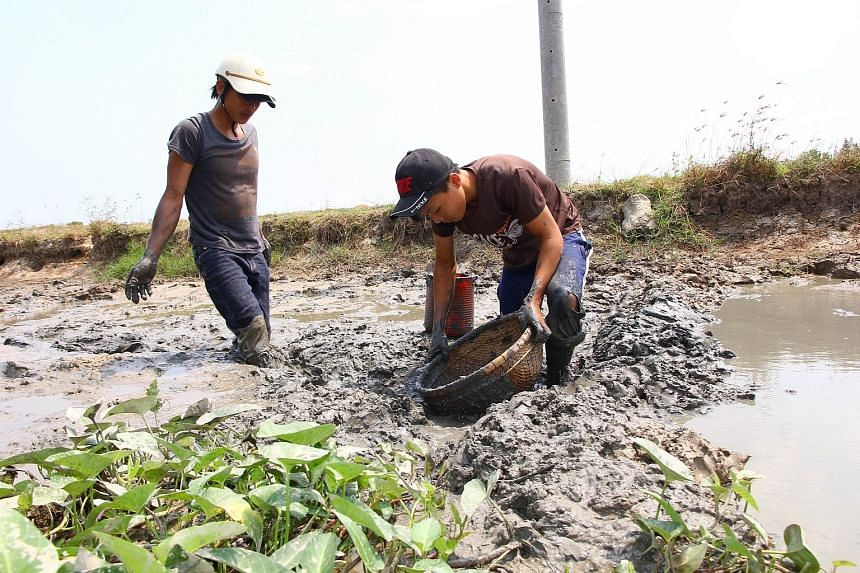 Left: A virtually dried-up irrigation canal in Thailand's Chachoeng Sao province. Above: Farmers in Vietnam trying to catch fish in an almost dry canal in Soc Trang. Thailand and Vietnam are facing their worst drought in decades.