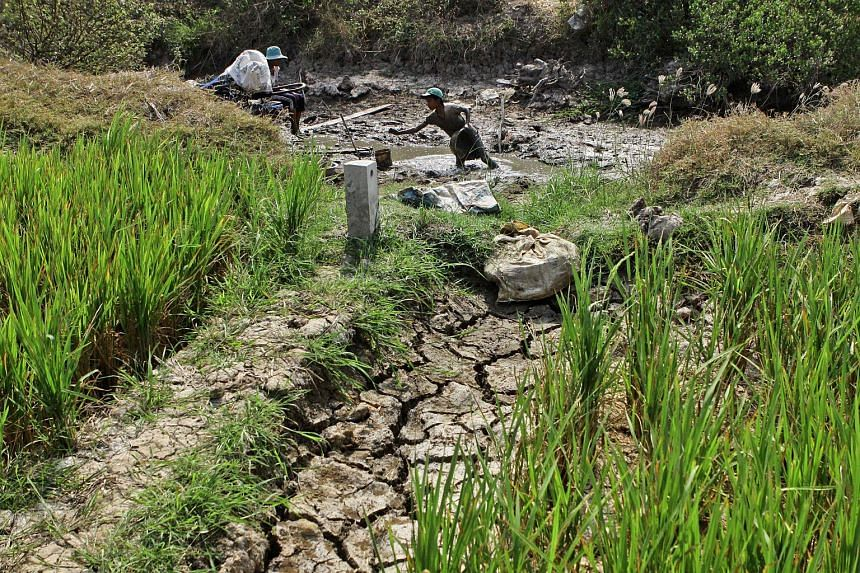 A family looking for fish in a nearly dry canal in the southern Mekong Delta province of Soc Trang, on March 8, 2016.