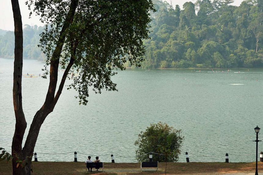 The MacRitchie Reservoir is a popular destination for those who seek peace and quiet.