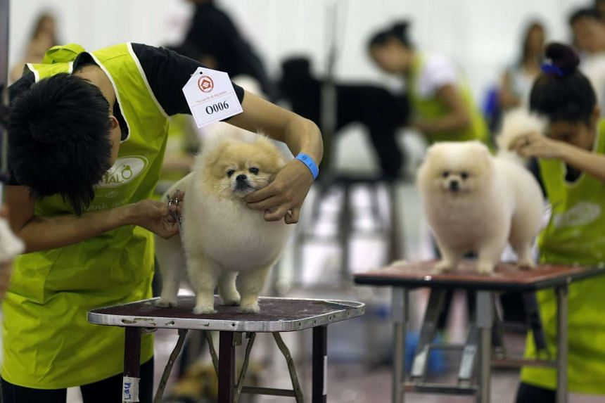 Participants with their dogs at a dog-grooming competition at the Pet Expo on 20 March 2015.
