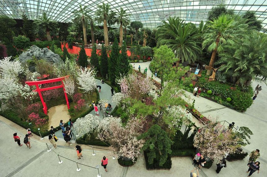 Blossom Beats at the Flower Dome at Gardens by the Bay, which features more than 20 varieties of cherry blossoms or sakura, is on till Sunday (March 27).