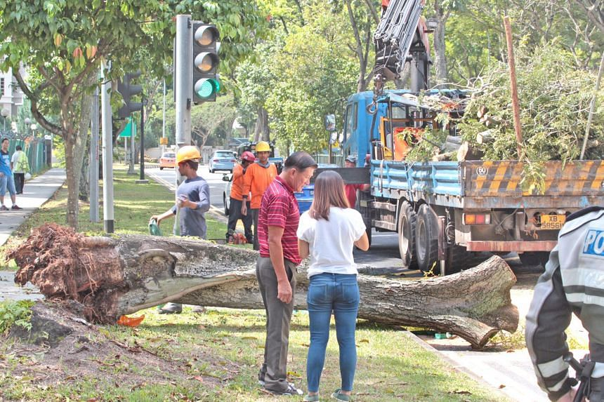 A tree fell on a taxi and a van at the junction of Boon Lay Drive and Corporation Road on March 28, 2016.