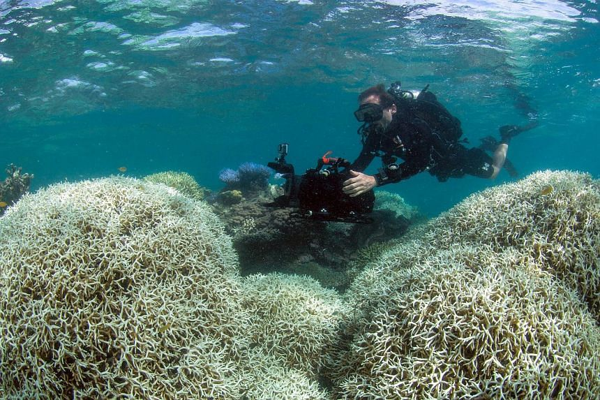 A diver filming corals affected by bleaching off Lizard Island in the Great Barrier Reef.