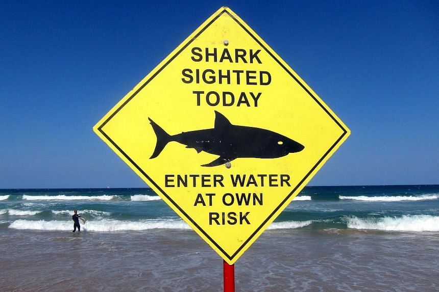 A surfer was recovering on Thursday (March 31) after reportedly having most of his thigh bitten off by a shark in Australia.