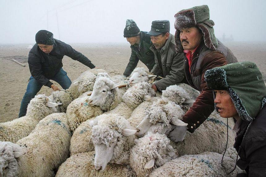 Kazakh herdsmen move sheep in Yili, Xinjiang Uighur Autonomous Region, China.