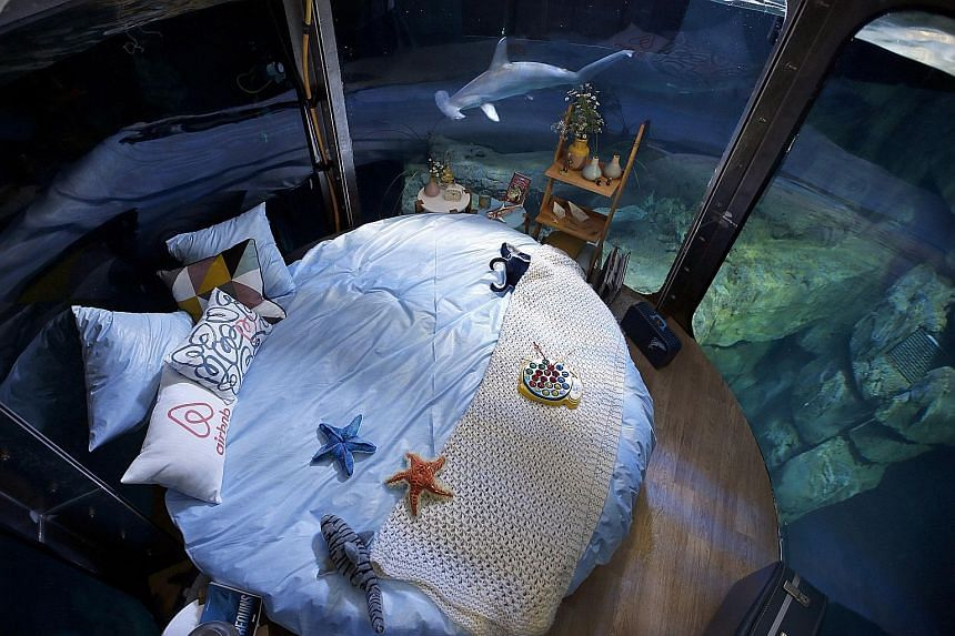 For three nights next month, winners of a competition organised by the Paris Aquarium and Airbnb get to sleep with sharks circling them.