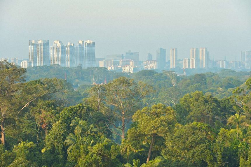 The view of the Central Catchment Nature Reserve and the Bukit Timah area (background) as seen from Lakeview Estate, just after sunrise.