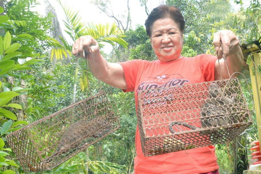 Temple volunteer Madam Shen holds up two trapped rats.