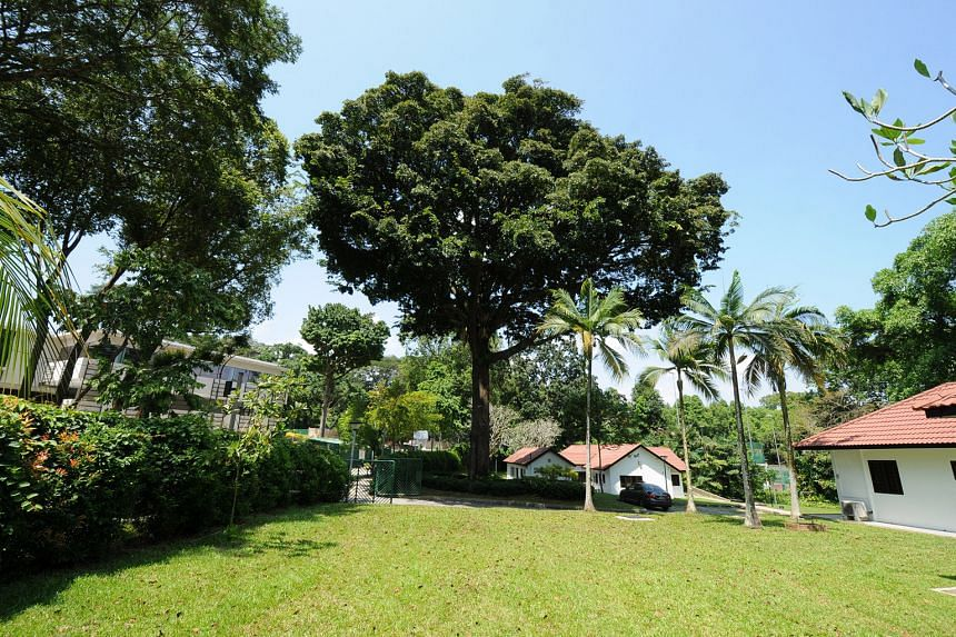 Four Tree Trails To Explore Home Design News Top Stories The Straits Times