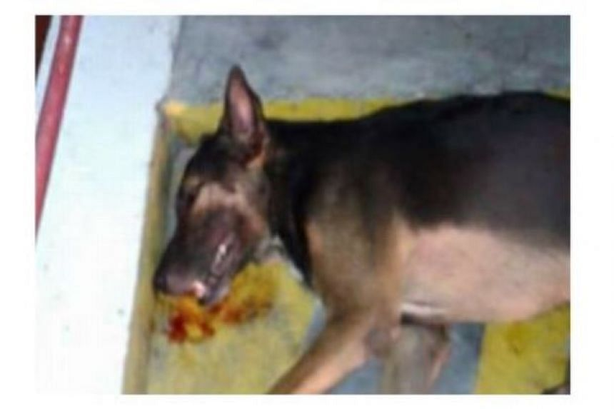 The dog that was allegedly abused to death by a security at a Malaysian mall.