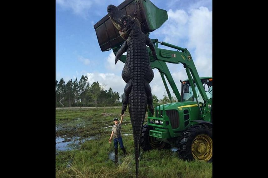 The alligator reportedly measured 4.5m long and weighed over 360kg.