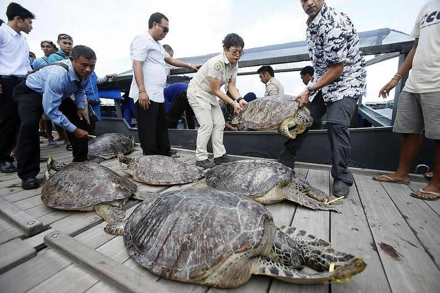 Indonesian marine police officers unloading sea turtles yesterday from a boat which they seized from illegal poachers in the Bali capital of Denpasar. A total of 45 sea turtles have reportedly been recovered from the poachers. The turtles were appare
