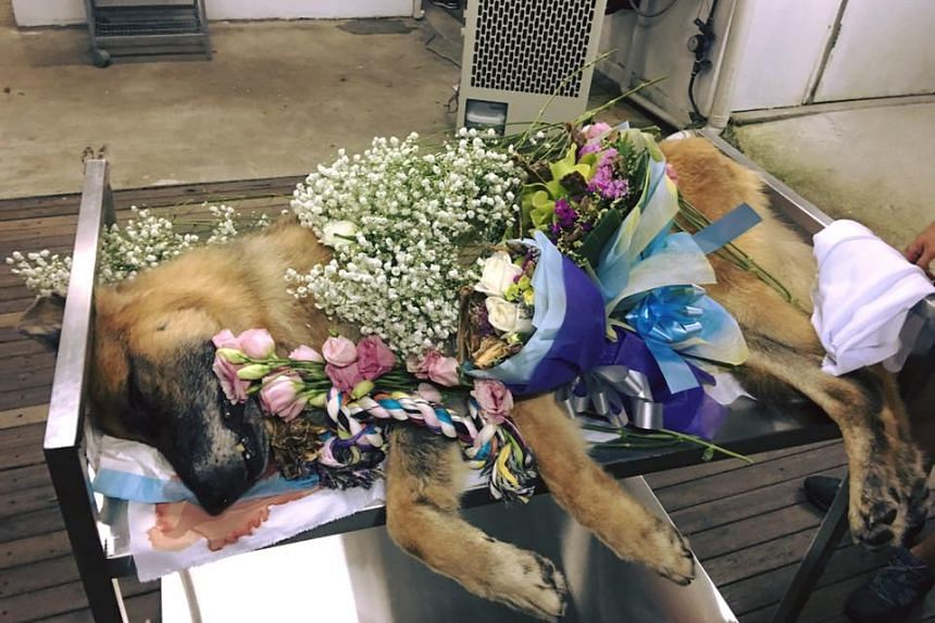 Sirius, a former police dog trained to trace human remains, was given a hero's farewell. It died on April 6, 2016.