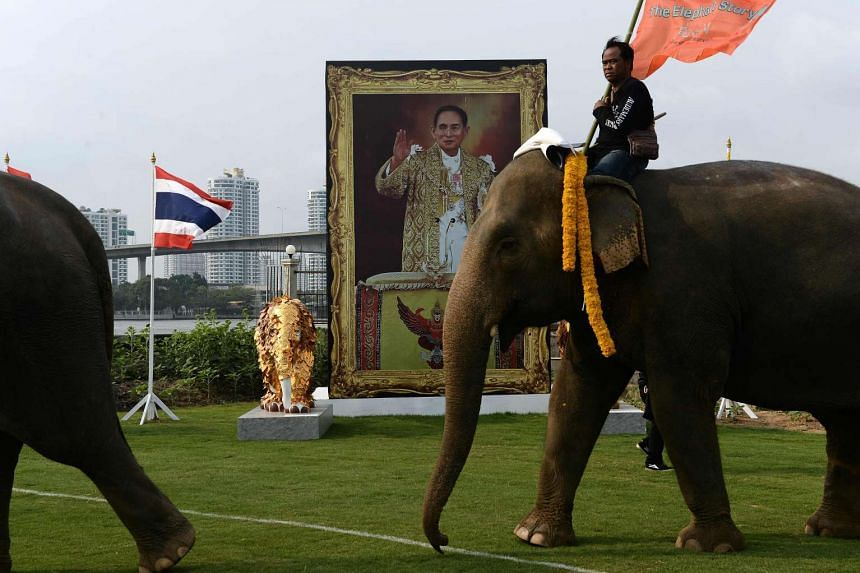 Elephants parade in front of an image of King Bhumibol Adulyadej at the 14th annual King's Cup Elephant Polo Tournament on March 10, 2016. A five-month-old French edition of Marie Claire magazine has been banned because of an article which police sai