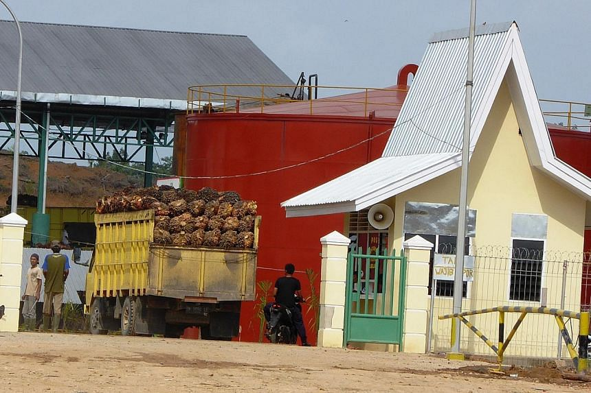 Oil palm fruit from an illegal plantation in Tesso Nilo National Park in Riau Province, Sumatra, arriving for processing at a mill.