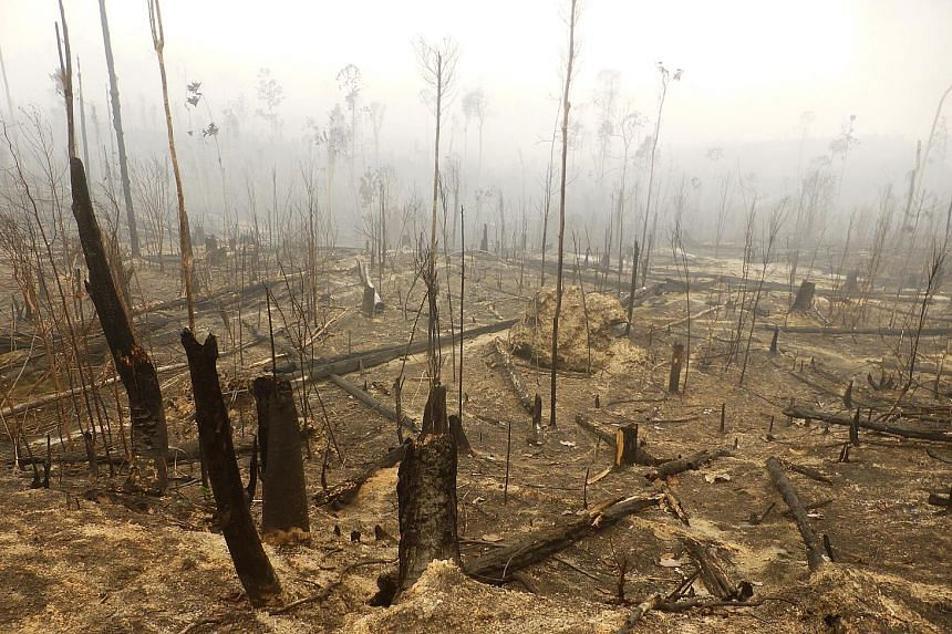 Oil palm plantations have been blamed for growing deforestation in Indonesia. Analysts say that productivity is the way to go if the country is serious about curbing deforestation.