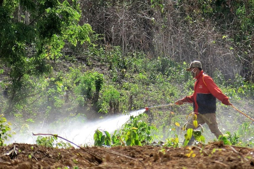 Banana plantations on land leased by foreign investors - almost all from China - are employing locals to spray chemicals over more than 10,000ha in Bokeo province alone, the official Lao News Agency reported.