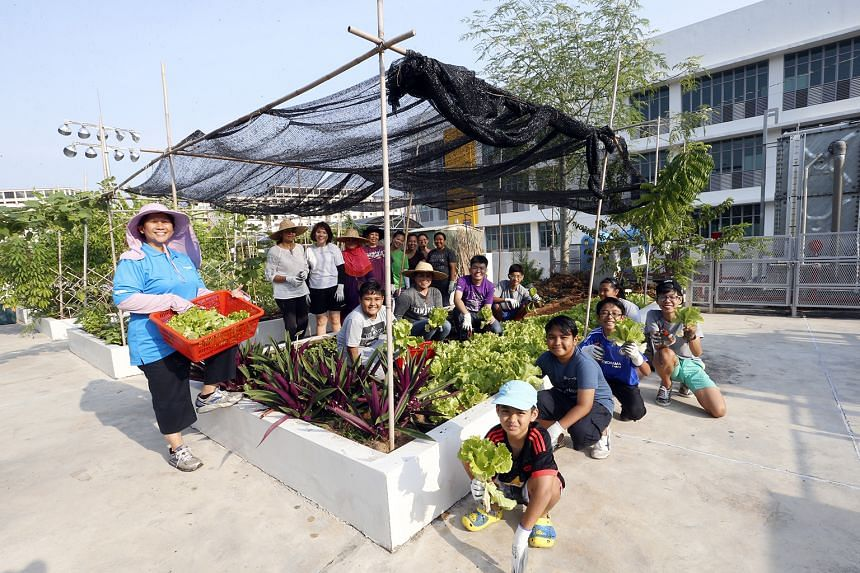 GARDENING... The Garden-Based Service Learning Programme, pioneered by Spectra Secondary School, allows students to grow plants and vegetables to teach them values such as resilience and responsibility.