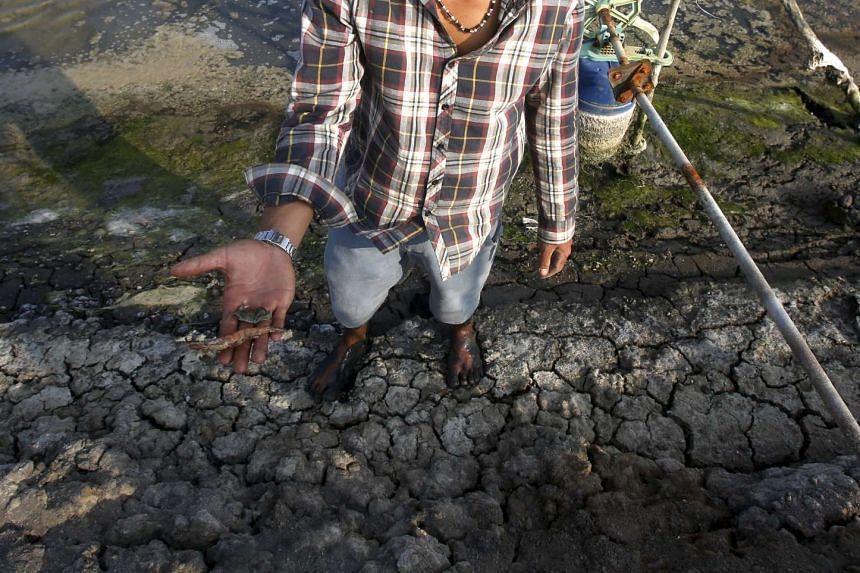 A farmer shows dead fish and dead shrimp on his shrimp farm in Mekong delta's Bac Lieu province, Vietnam on March 30, 2016.