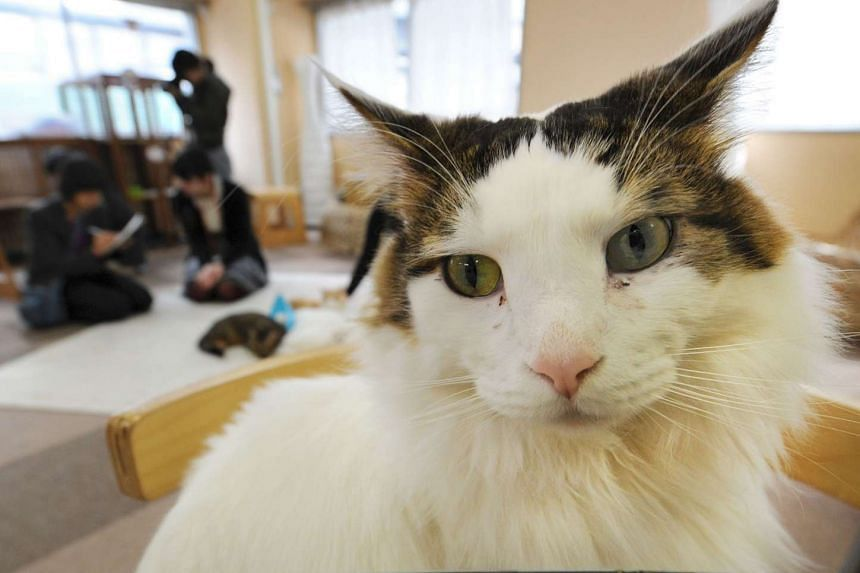 "A ""cat cafe"" in Tokyo was raided by health inspectors and ordered to close due to animal neglect after complaints about nasty smells coming from the premises."
