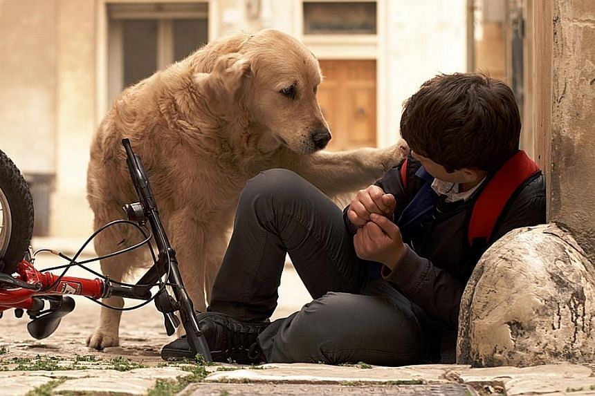 Italo is centred on a group of children who shelter a stray dog.