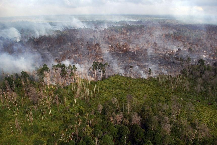 An aerial view of a forest fire burning near the village of Bokor, Meranti Islands regency, Riau province, Indonesia, on March 15, 2016.