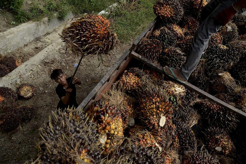 Indonesia is the world's top palm oil producer and planted area by the end of last year was nearly 11 million hectares, according to the United States Department of Agriculture.