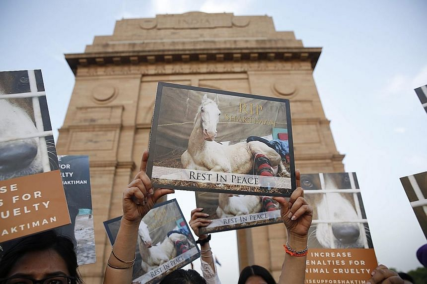 Indian activists in New Delhi holding a candlelight vigil on Thursday to pay tribute to police horse Shaktiman, which died after being injured during a political rally in Uttarakhand on March 14. The horse was allegedly attacked by a politician and i