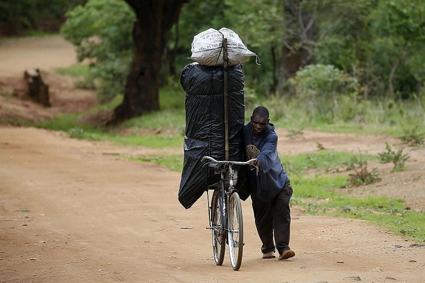 A man transporting charcoal for sale in Malawi where late rains threaten the staple maize crop. The climate-hammered farmlands in many African nations can no longer sustain the populations, so the men have scattered to the four winds in search of any