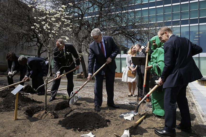 United Nations diplomats plant a Dogwood tree at the signing of the Paris agreement on climate change in New York, on April 22, 2016.