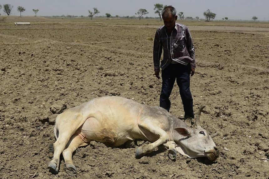 The drought has affected crops and livestock in places like India.