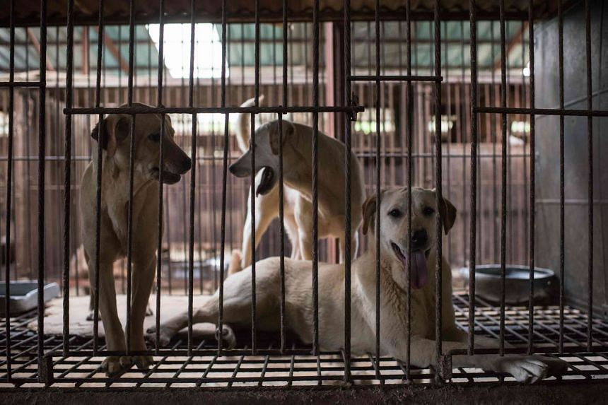 Dogs sit in a cage in a dog meat farm in Wonju, south East of Seoul on April 27, 2016.