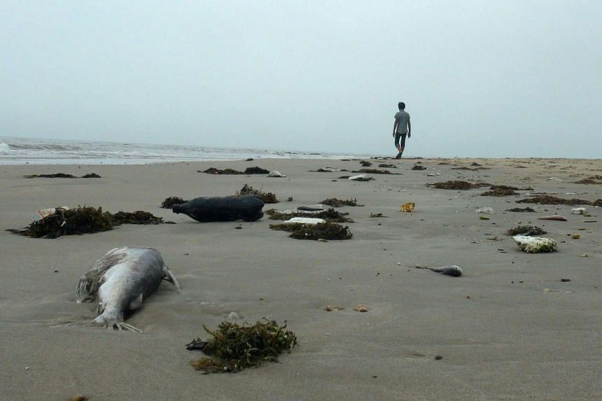 A man walking among dead fish lying on a beach in Quang Trach district in the central coastal province of Quang Binh, Vietnam.