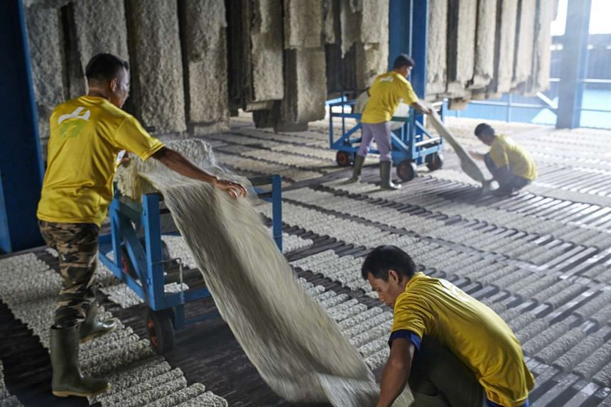 Natural rubber being processed at a Halcyon Agri facility at North Bridge Road.