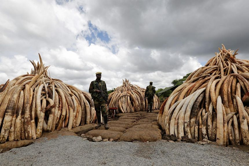 Kenya Wildlife Service rangers guard the confiscated ivory stockpile stacked up onto pyres at the Nairobi National Park, in Kenya, on April 28, 2016.