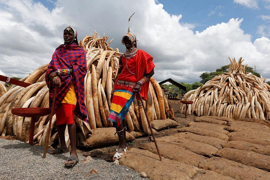 Traditional Maasai tribesmen pose near confiscated ivory to be set ablaze, stacked onto a pyre at Nairobi National Park, in Kenya, on April 28, 2016.