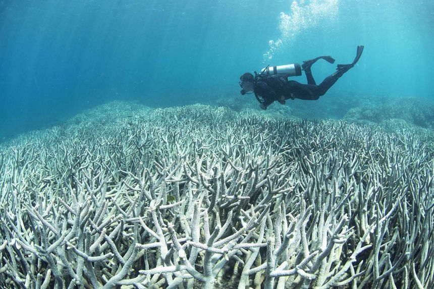 A diver checking the bleached coral at Heron Island on the Great Barrier Reef in this undated handout released by XL Catlin Seaview Survey.