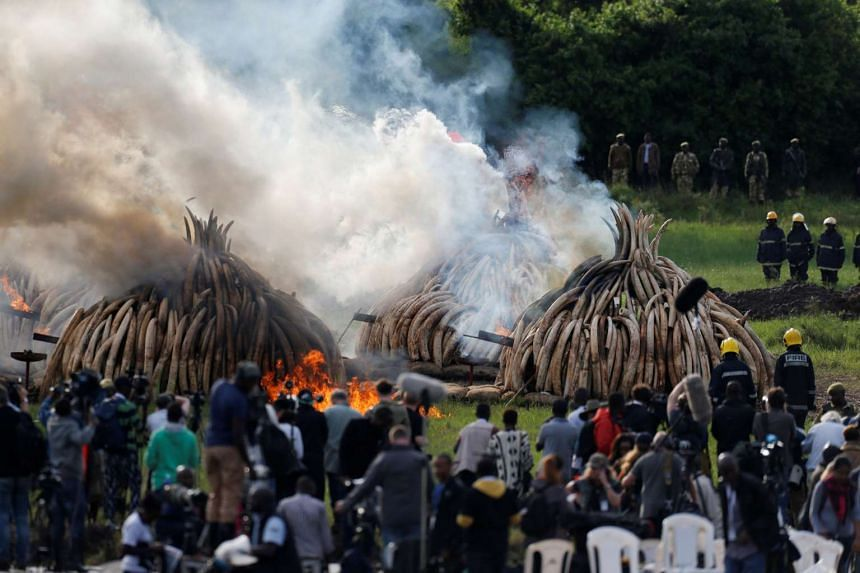 Piles of confiscated ivory burning in Nairobi's national park on April 30, 2016.