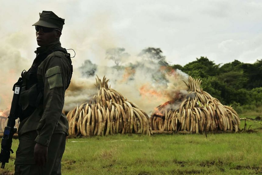 A ranger standing in front of burning ivory stacks at Nairobi National Park on April 30, 2016.