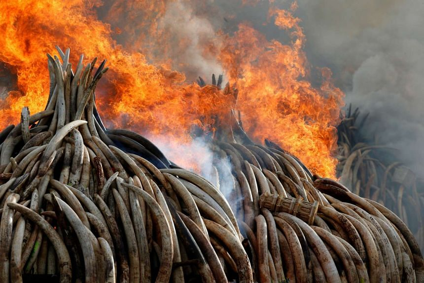 Fire burning part of an estimated 105 tonnes of ivory and a tonne of rhino horn at Nairobi National Park on April 30, 2016.