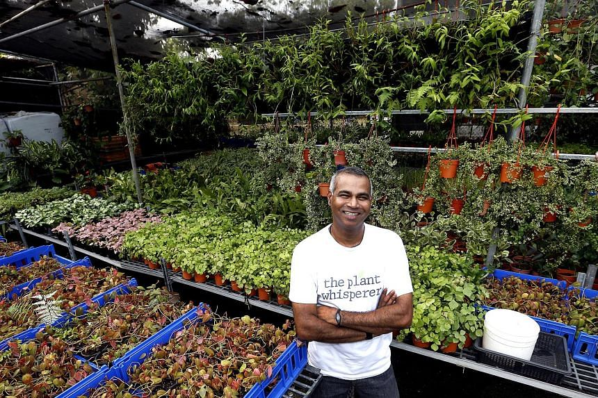 Above: Mr Veera started Greenology, which develops ideas for green walls and urban farms and offers horticultural consultancy services.
