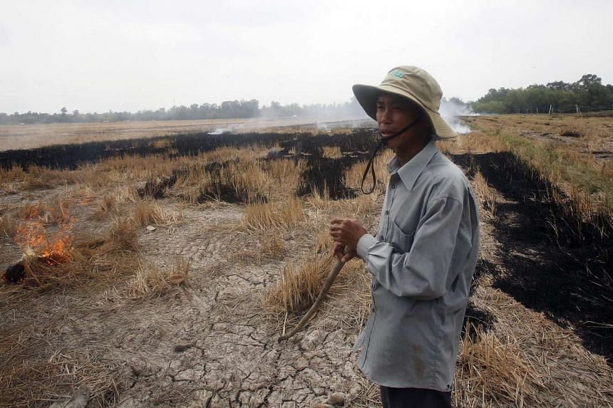 A farmer burns his dried-up rice on a paddy field stricken by drought in Soc Trang province in the Mekong Delta in Vietnam, on March 30, 2016.