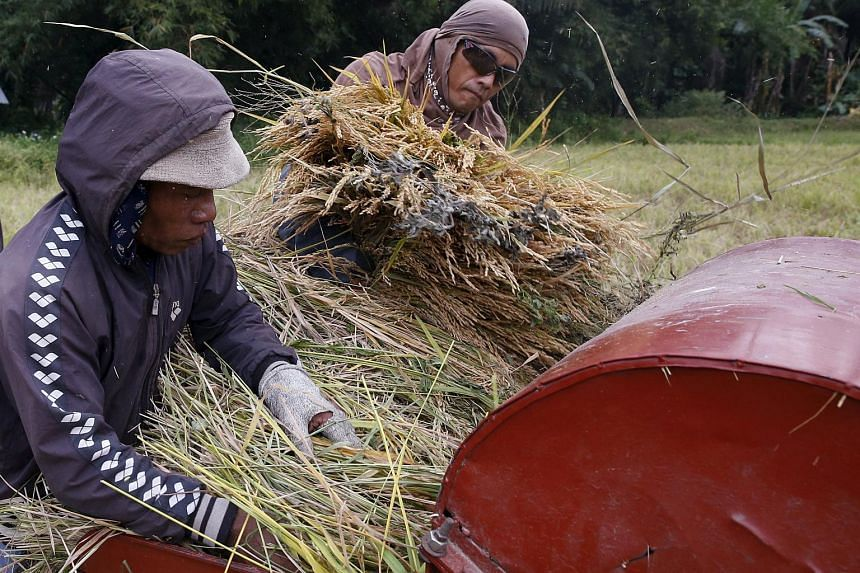 Farmers place rice stalks on a makeshift thresher to separate Palay grains at a rice field in Marinduque, Philippines, on March 27, 2016.